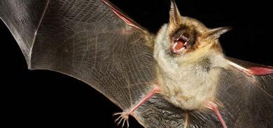 bat-services