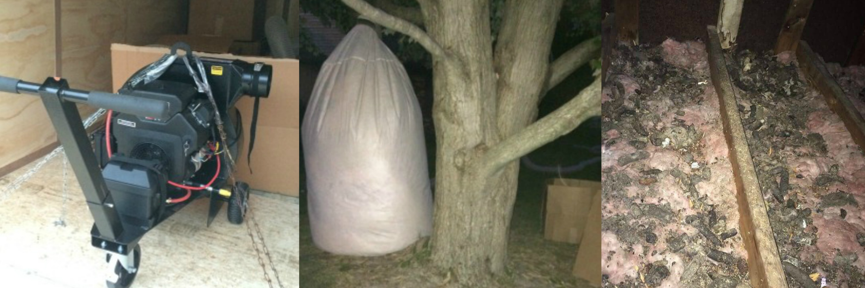 raccoon waste cleanup columbus ohio