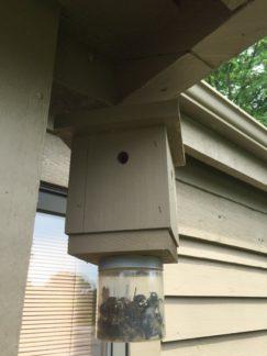 Carpenter Bee Damage Control Columbus Ohio